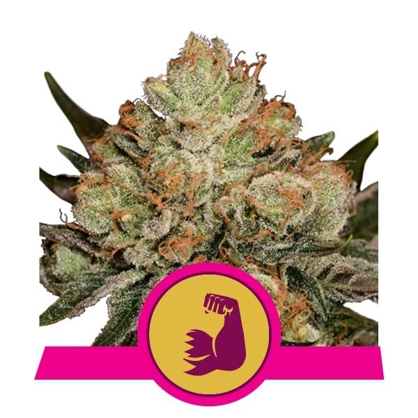 hulkberry-min