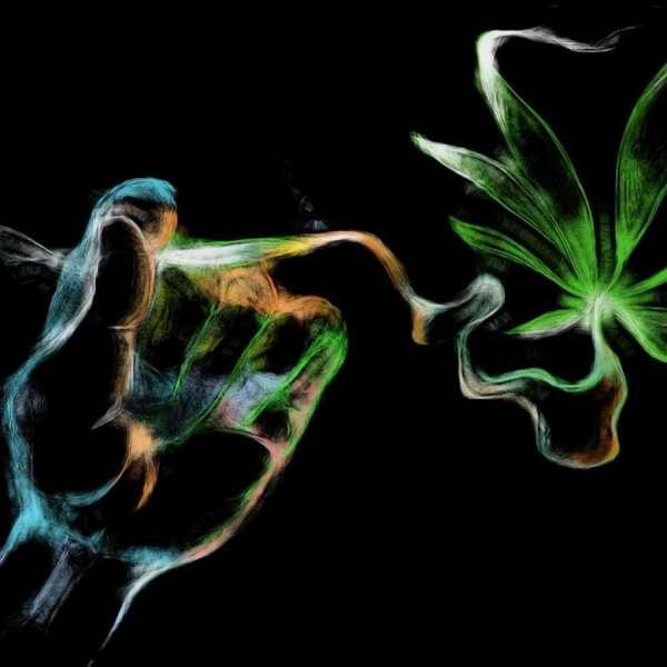 seminte marijuana